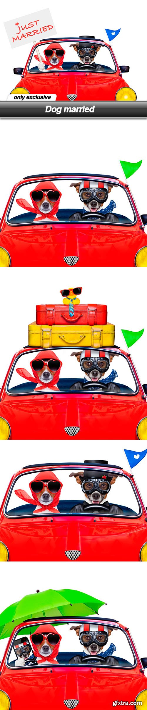 Dog married - 5 UHQ JPEG