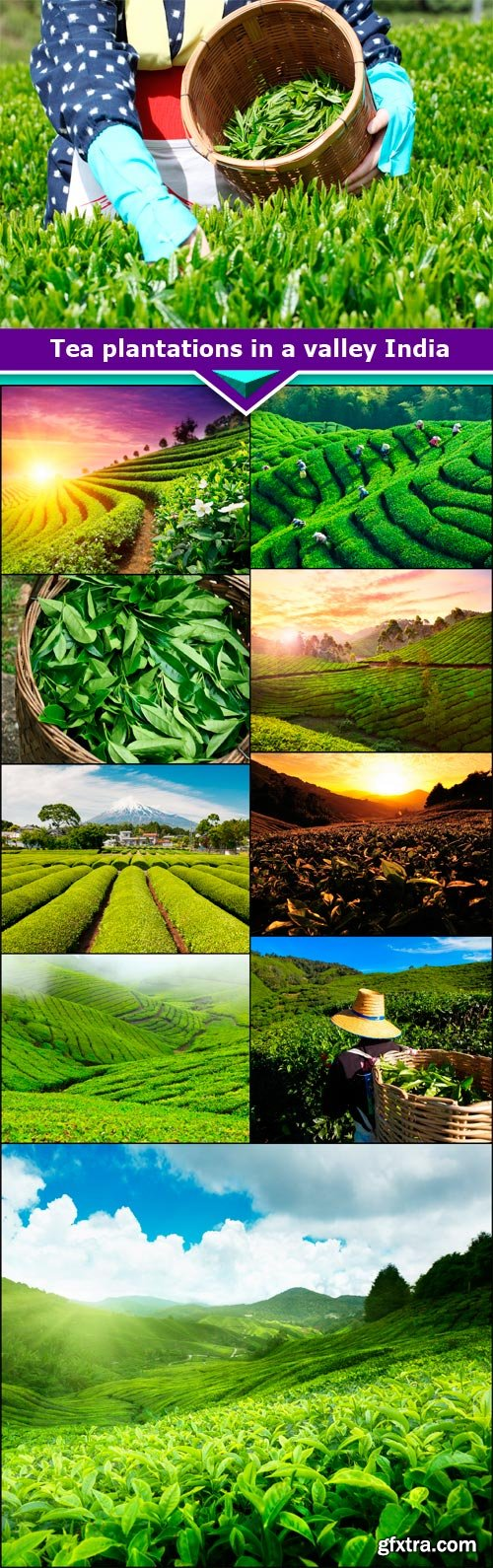 Tea plantations in a valley India 10X JPEG