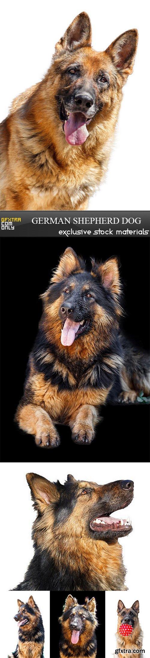 German Shepherd Dog - 6 UHQ JPEG