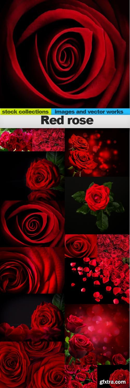 Red rose, 15 x UHQ JPEG