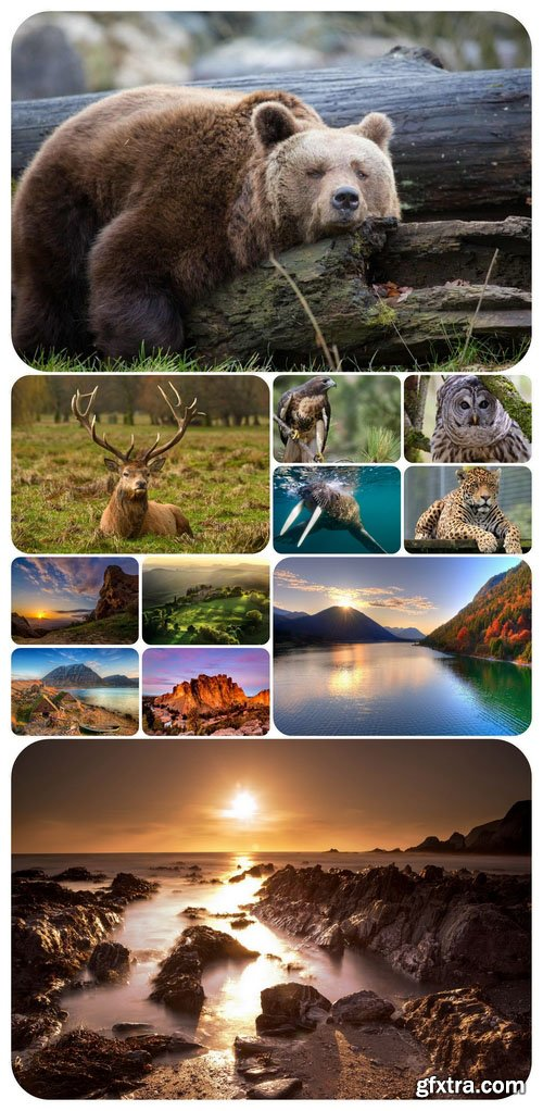 Wallpapers - Nature and animals 14