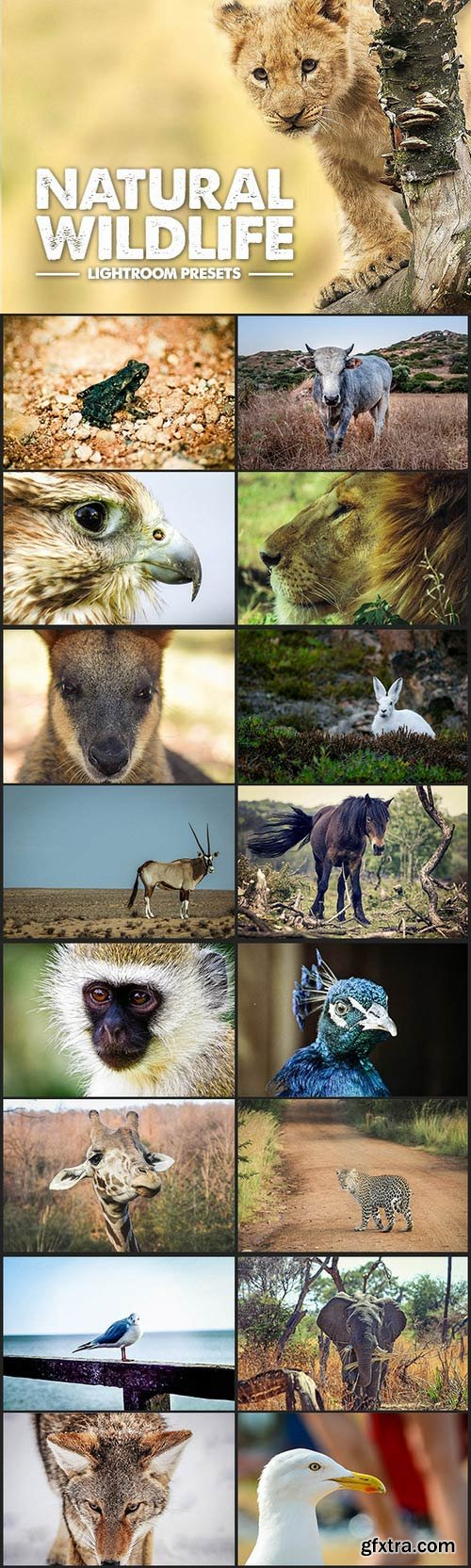 CM - Wildlife Lightroom Presets 335167