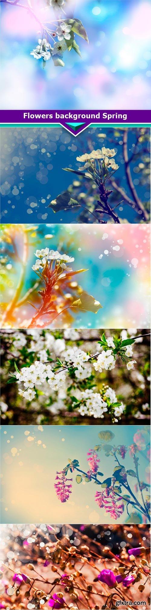 Flowers background Spring 6x JPEG