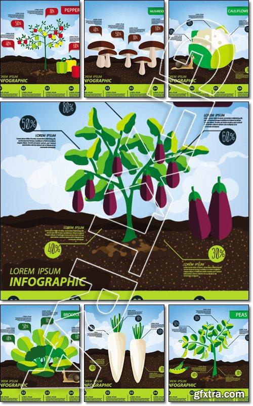 Vegetables infographics, illustration - Vector