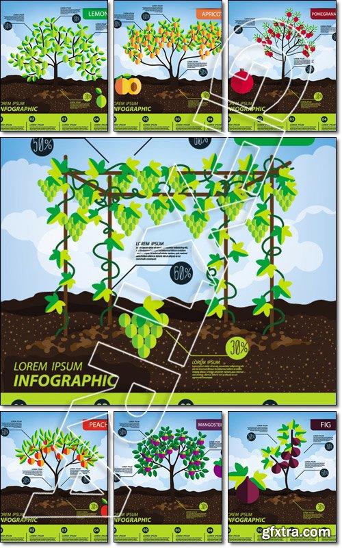 Fruits, infographics, illustration - Vector