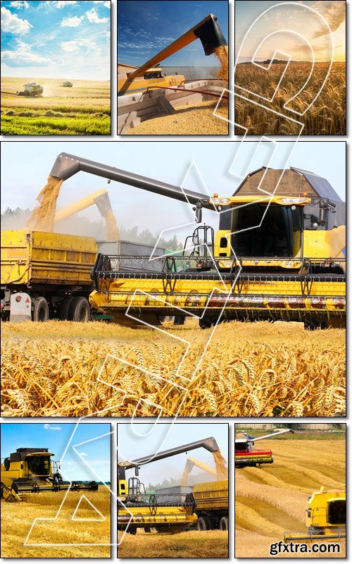 Working Harvesting Combines in the Field of Wheat - Stock photo