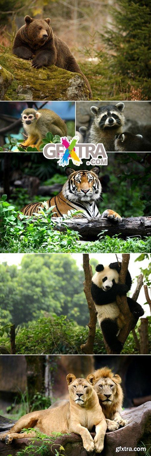 Stock Photo - Wild Animals