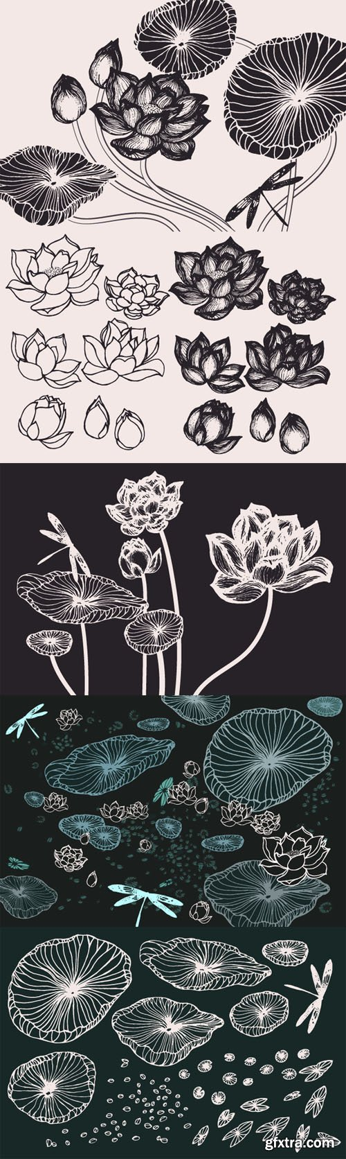 Lotus Flowers & Leaves Drawings - CM 131007