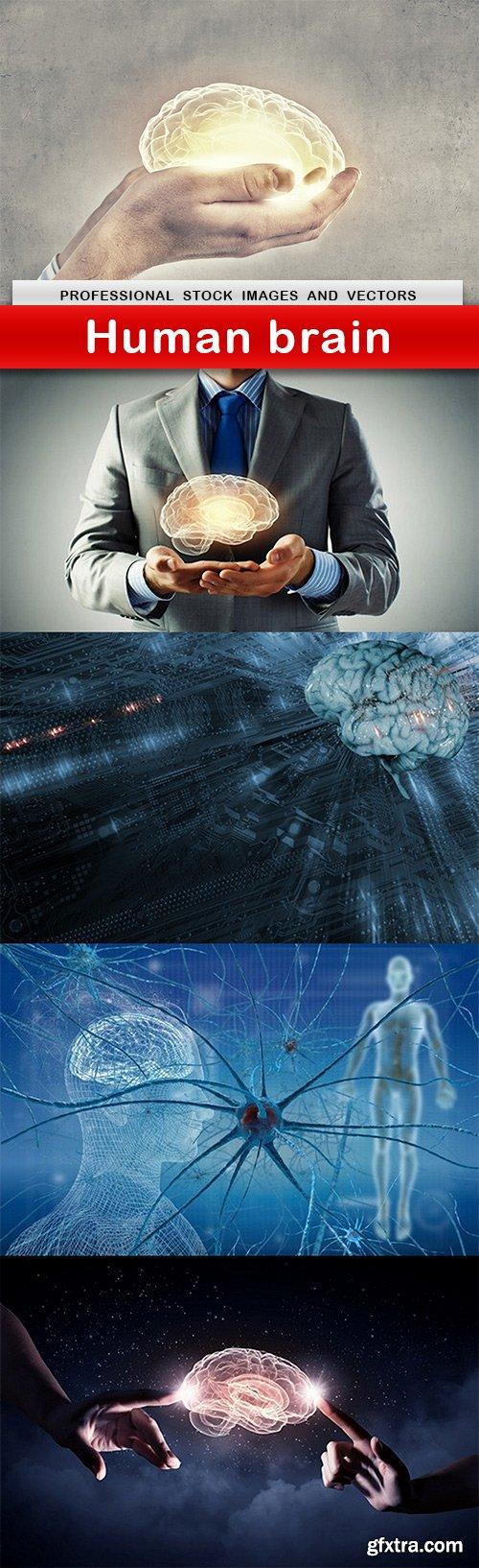 Human brain - 5 UHQ JPEG