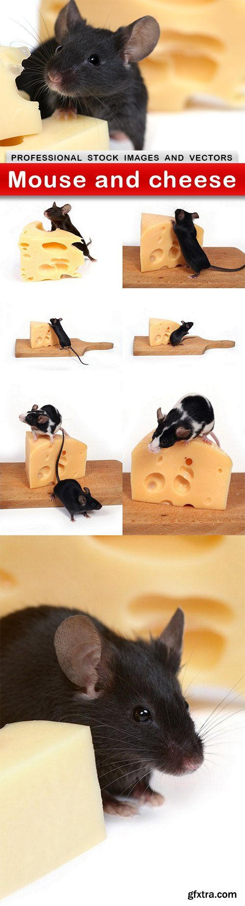 Mouse and cheese - 8 UHQ JPEG