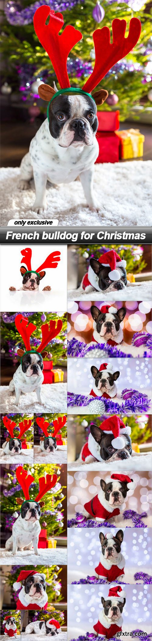 French bulldog for Christmas - 15 UHQ JPEG