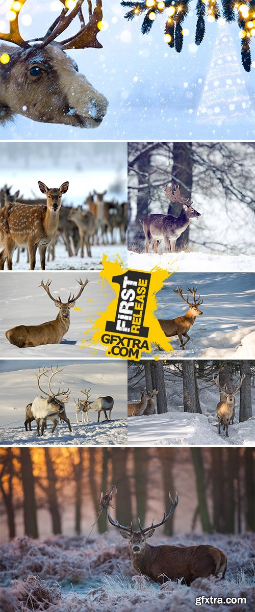 Stock Image Deer on winter background
