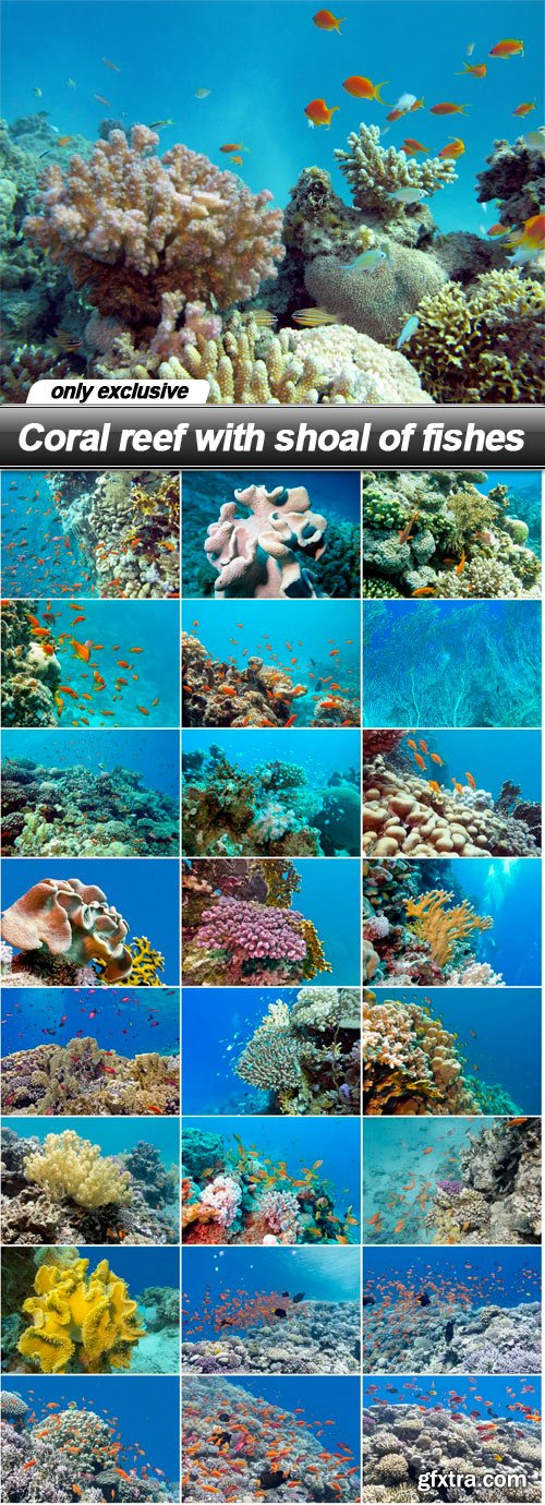 Coral reef with shoal of fishes - 25 UHQ JPEG