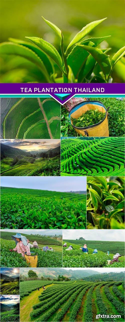 Tea plantation Thailand 12x JPEG