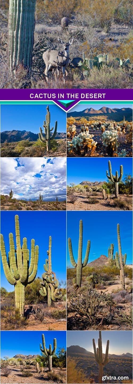 Cactus in the desert 8x JPEG