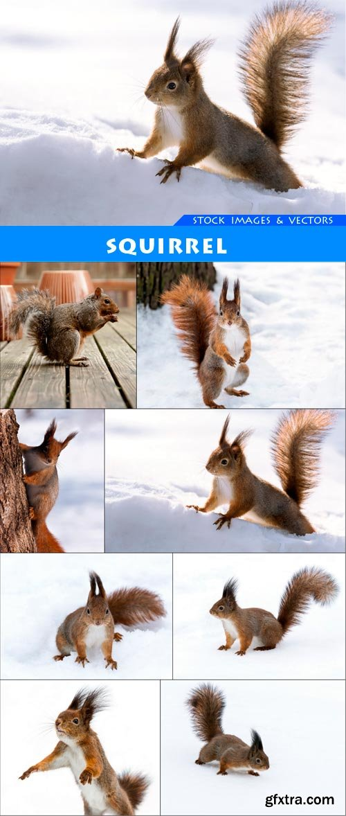 squirrel 8X JPEG