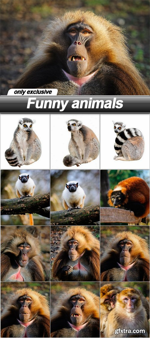 Funny animals - 12 UHQ JPEG