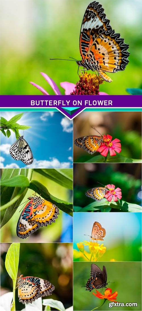 Butterfly on flower 8x JPEG