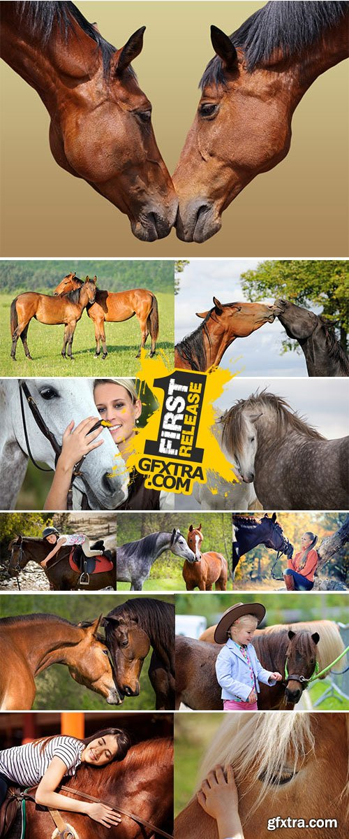 Stock Image Horse love