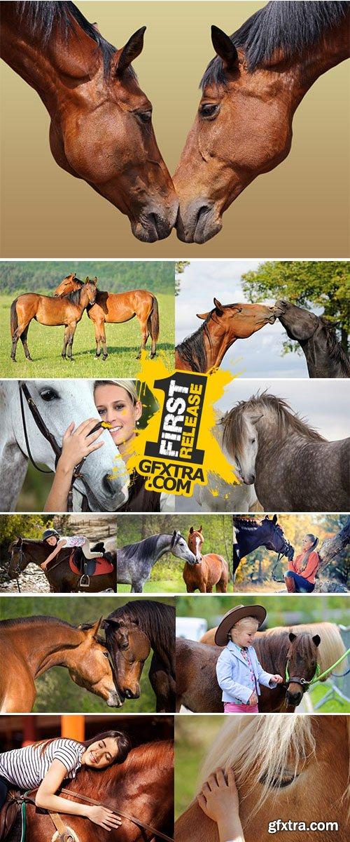 Stock Image Horse love