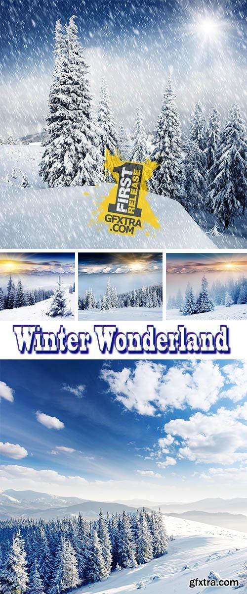 Stock Photo: Winter Wonderland
