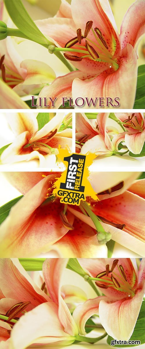 Stock Photo: Lily flowers