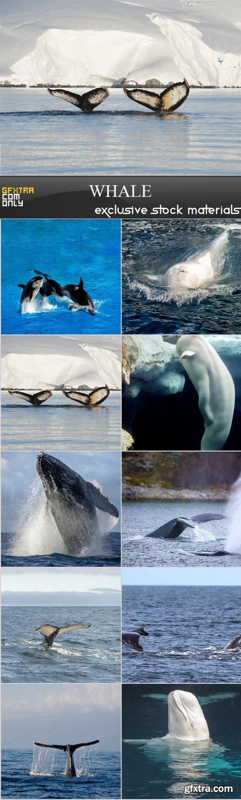 Whale - 10 x UHQ JPEG