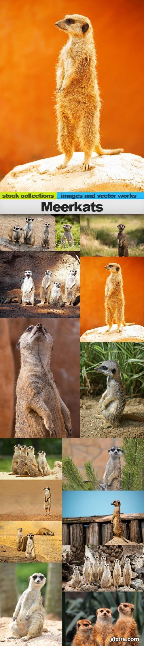 Meerkats, 15 x UHQ JPEG