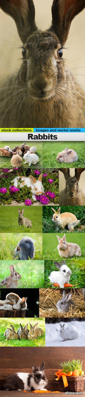 Rabbits, 15 x UHQ JPEG