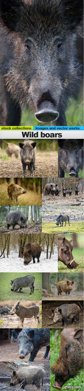 Wild boars, 15 x UHQ JPEG