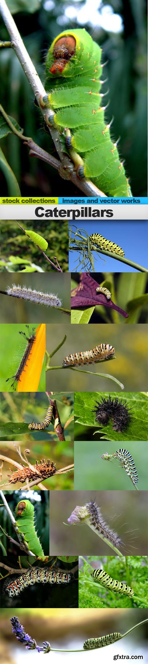 Caterpillars, 15 x UHQ JPEG