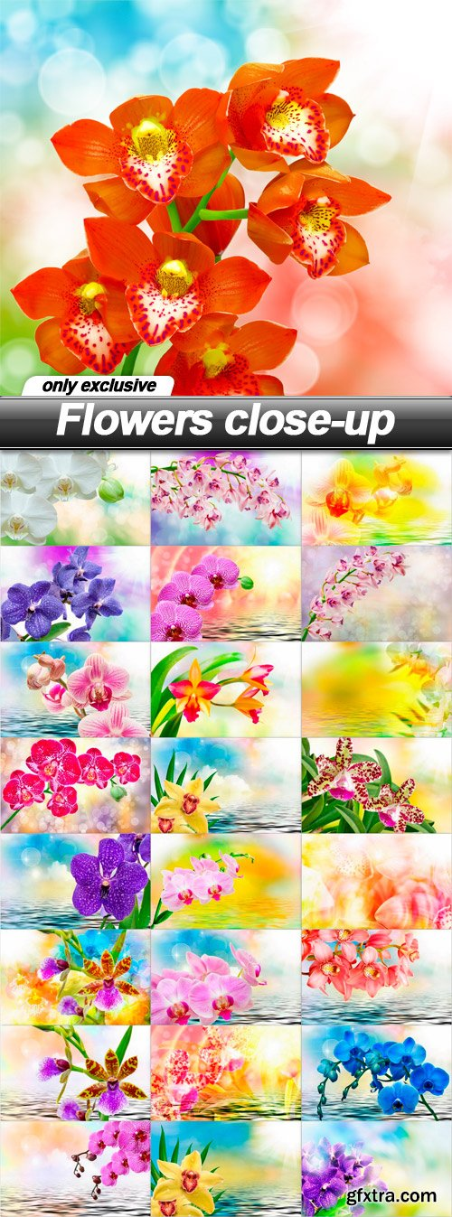 Flowers close-up - 25 UHQ JPEG