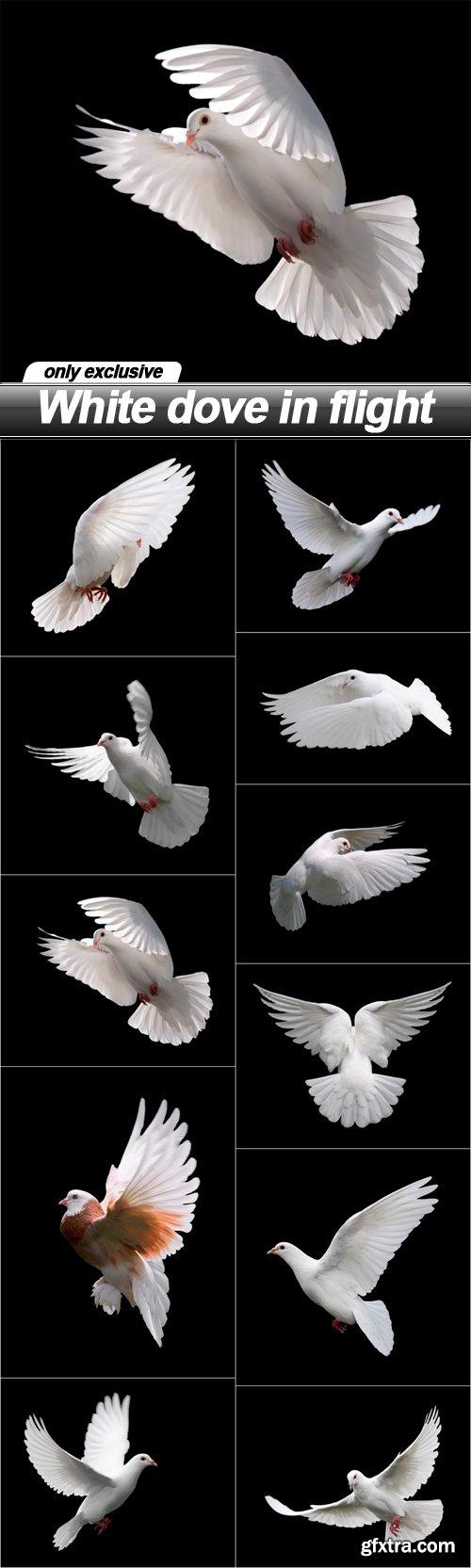 White dove in flight - 11 UHQ JPEG