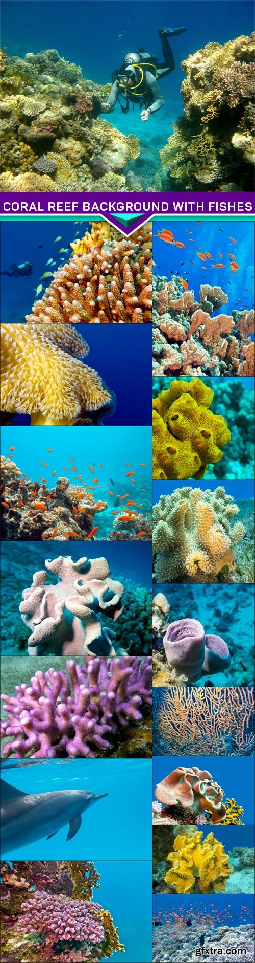 Coral reef background with fishes and diving 16x JPEG