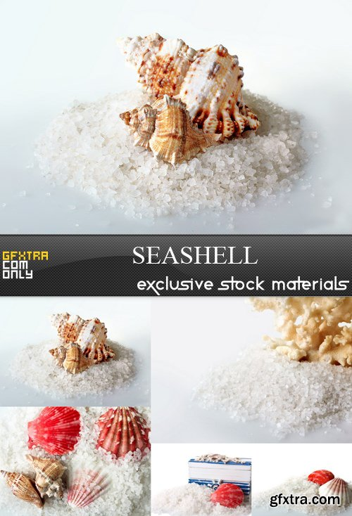 Seashell - 5 UHQ JPEG