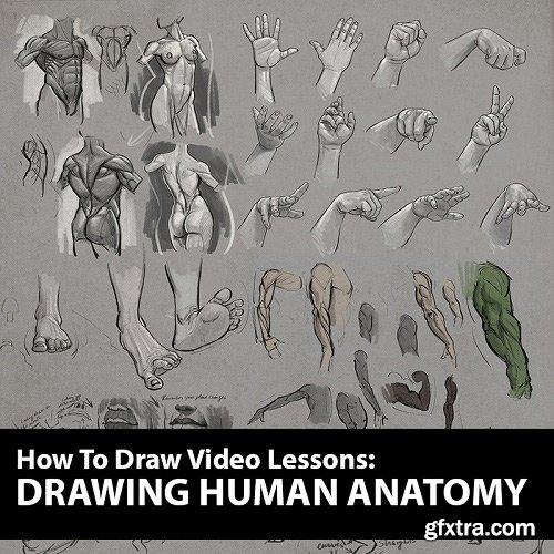 How to Draw: Drawing Human Anatomy