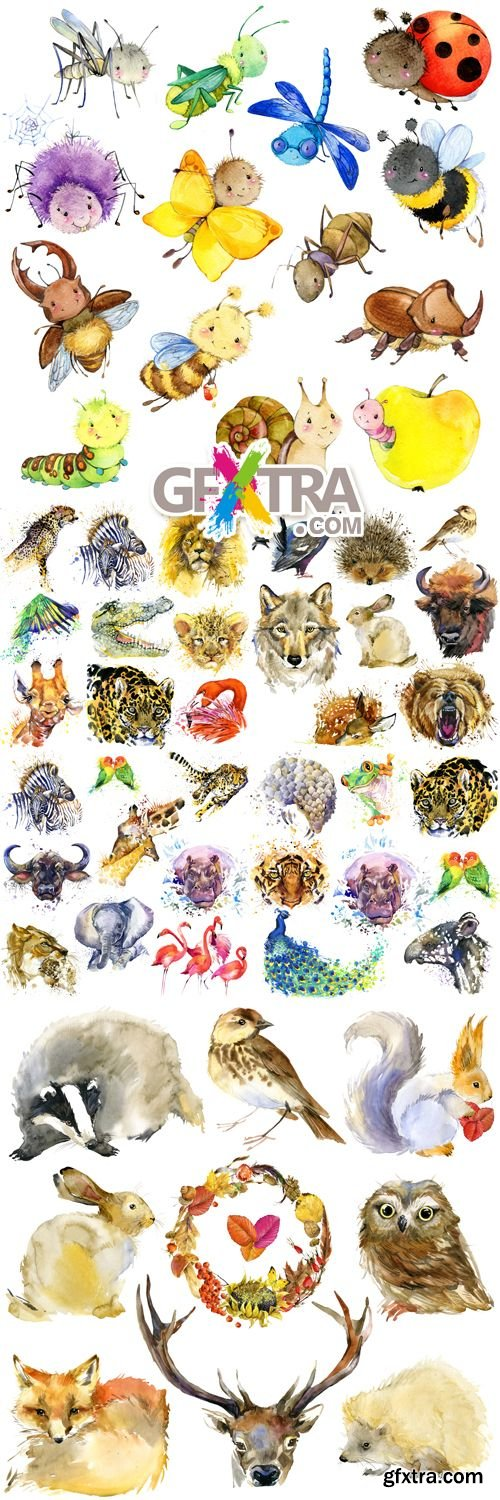 Stock Photo - Watercolor Animals & Insects
