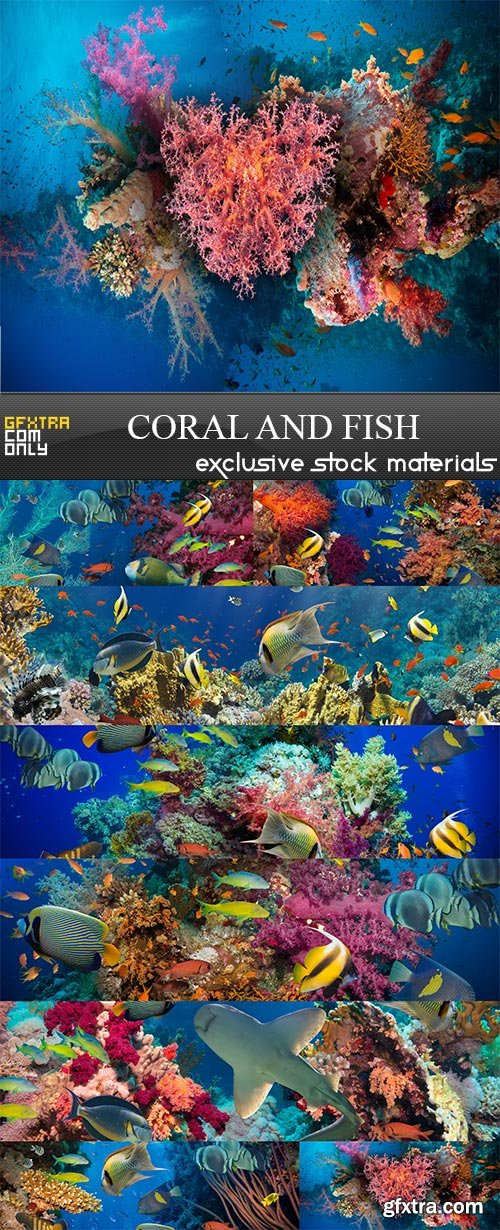 Coral and fish, 8  x  UHQ JPEG