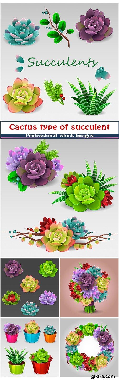 Cactus type of succulent