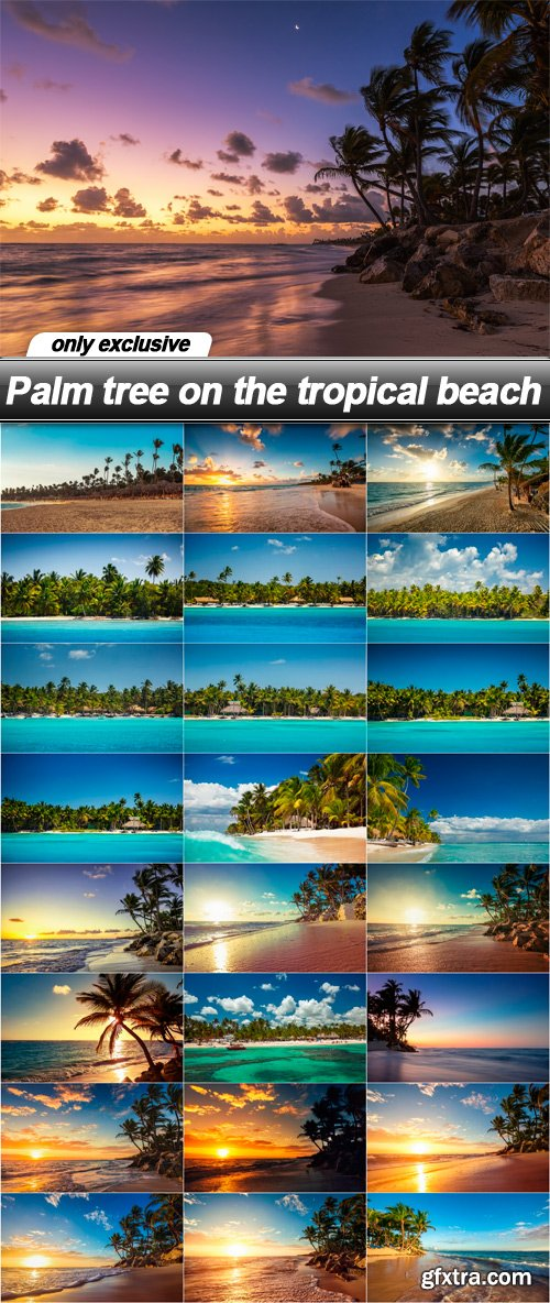 Palm tree on the tropical beach - 25 UHQ JPEG