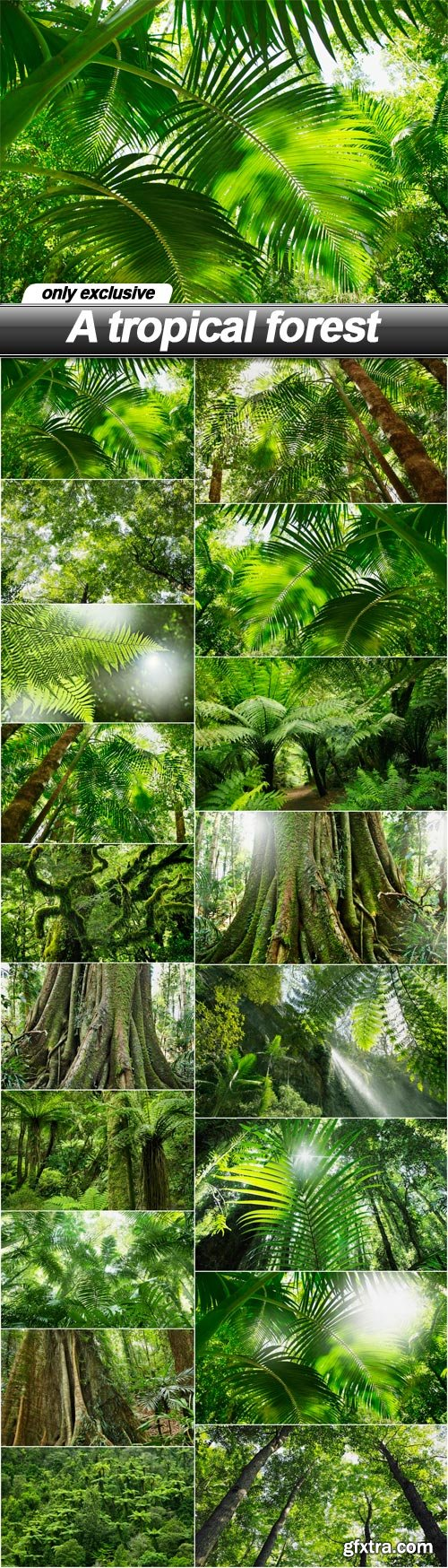 A tropical forest - 18 UHQ JPEG