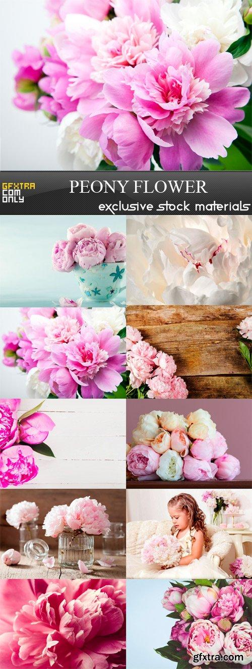 Peony Flower - 10 x JPEGs