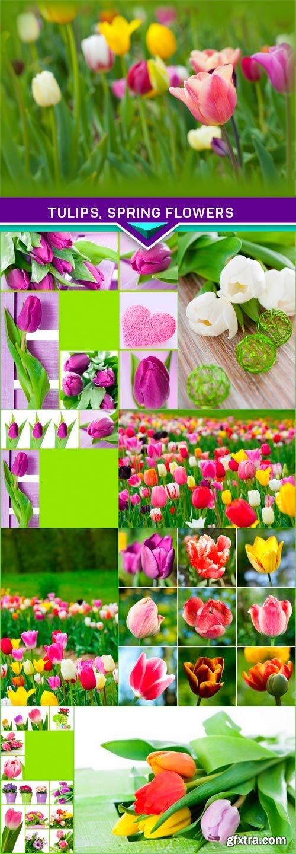 Tulips, spring flowers 10x JPEG