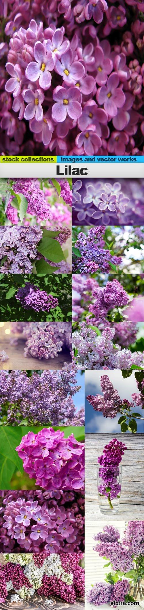 Lilac, 15 x UHQ JPEG