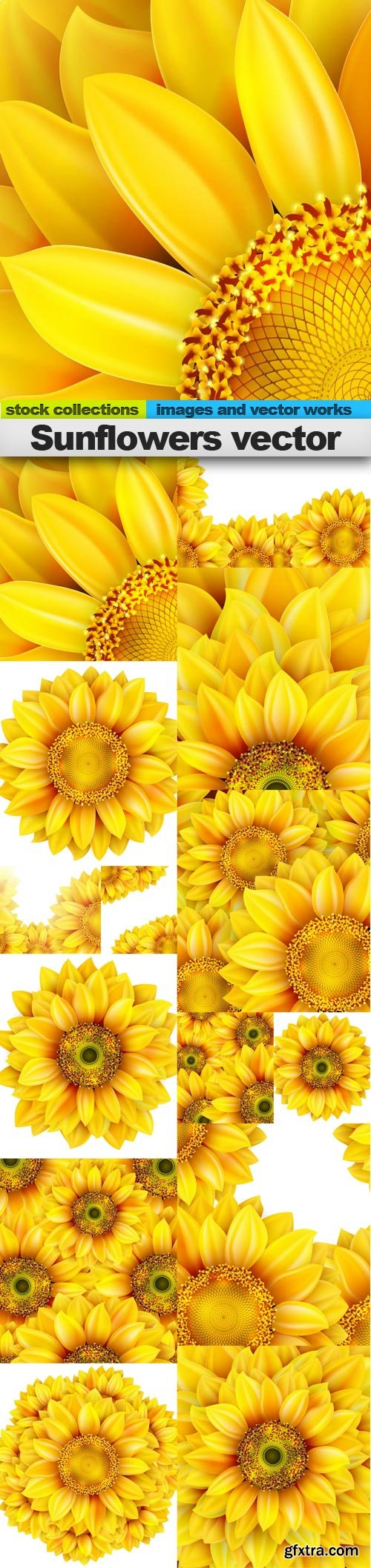 Sunflowers vector, 15 x EPS