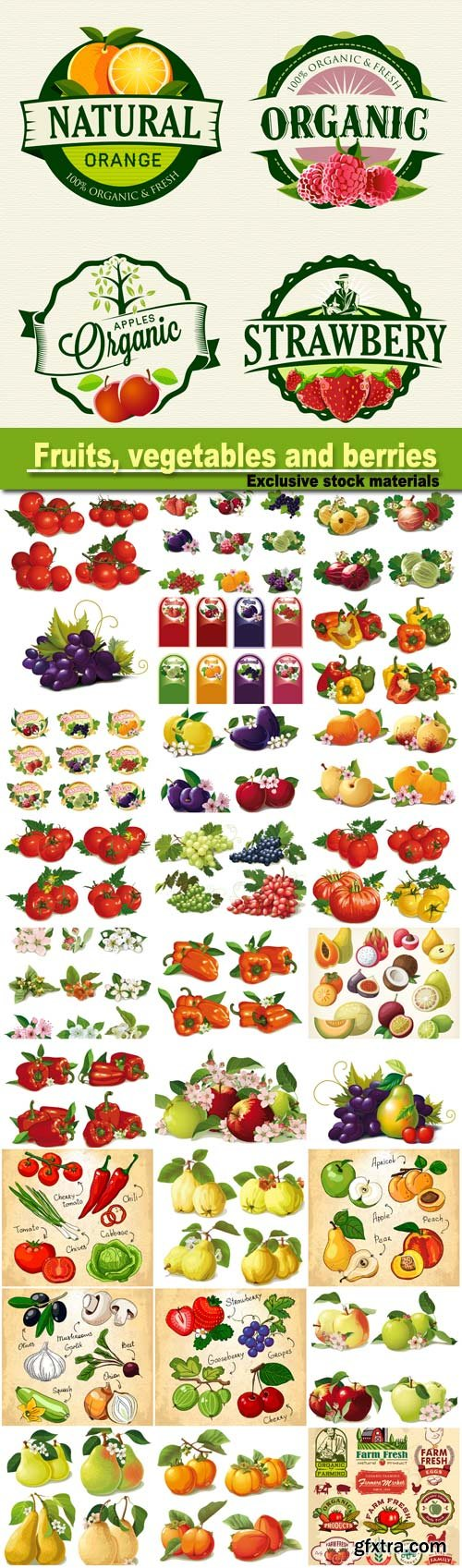 Set of fruits, vegetables and berries vector
