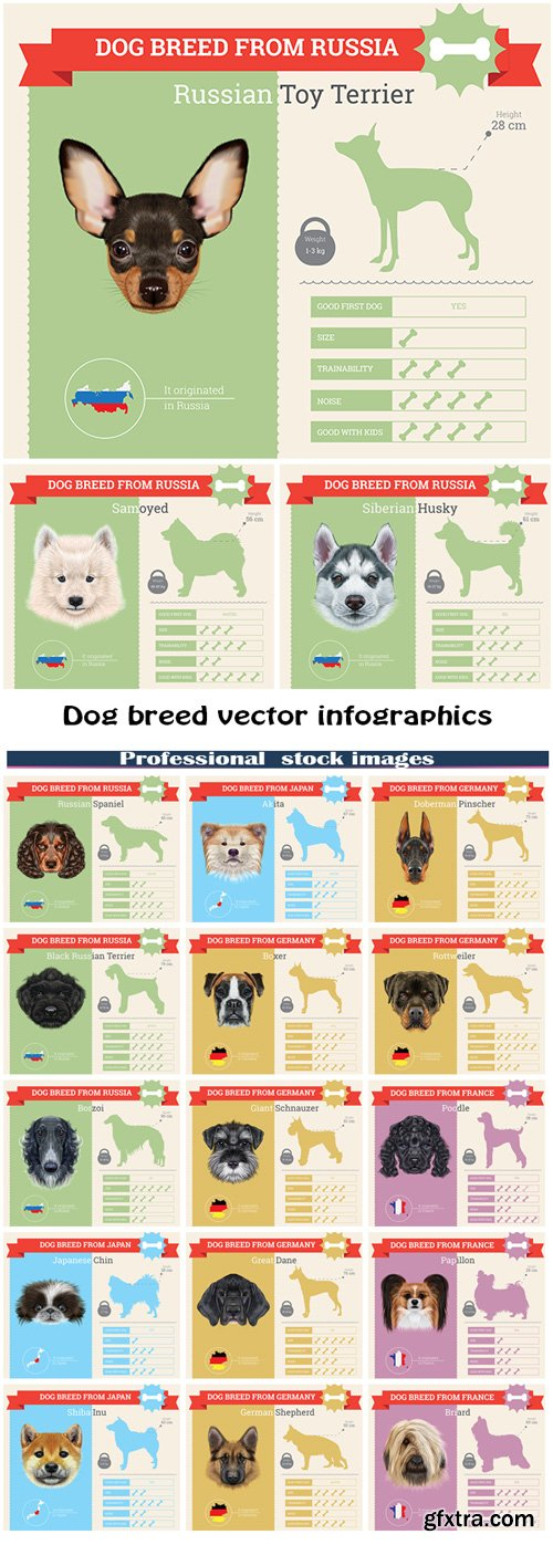 Dog breed vector infographics