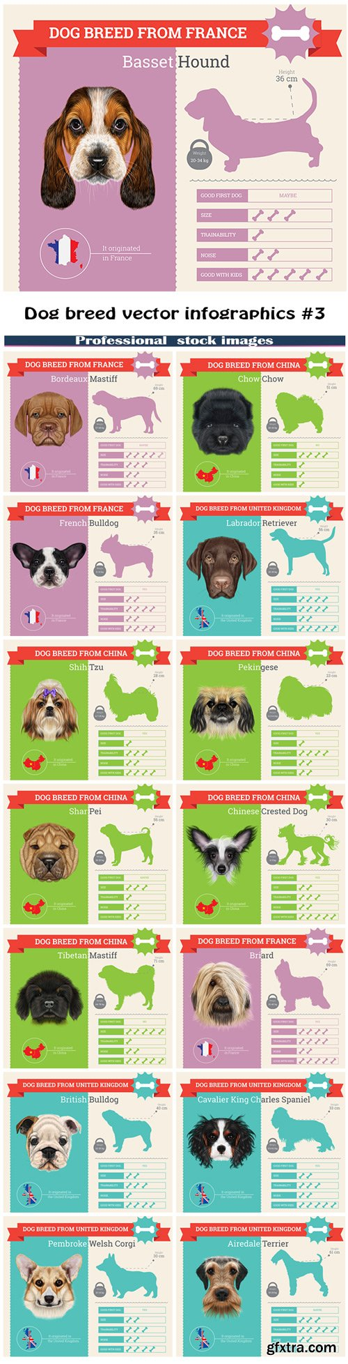 Dog breed vector infographics #3