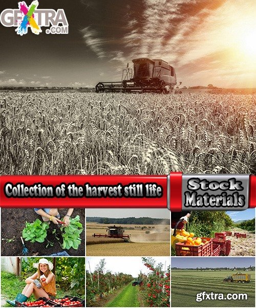 Collection of the harvest still life fruit vegetables agriculture farming 25 HQ Jpeg
