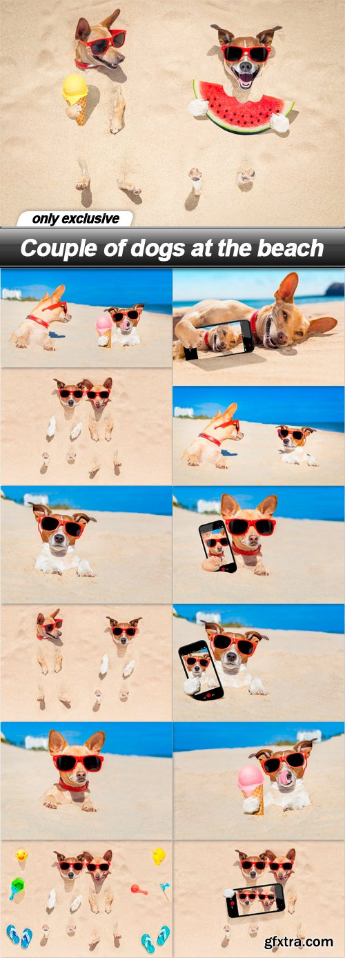 Couple of dogs at the beach - 13 UHQ JPEG